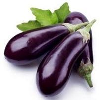 Eggplants Aubergine Fae's Twist & Tango