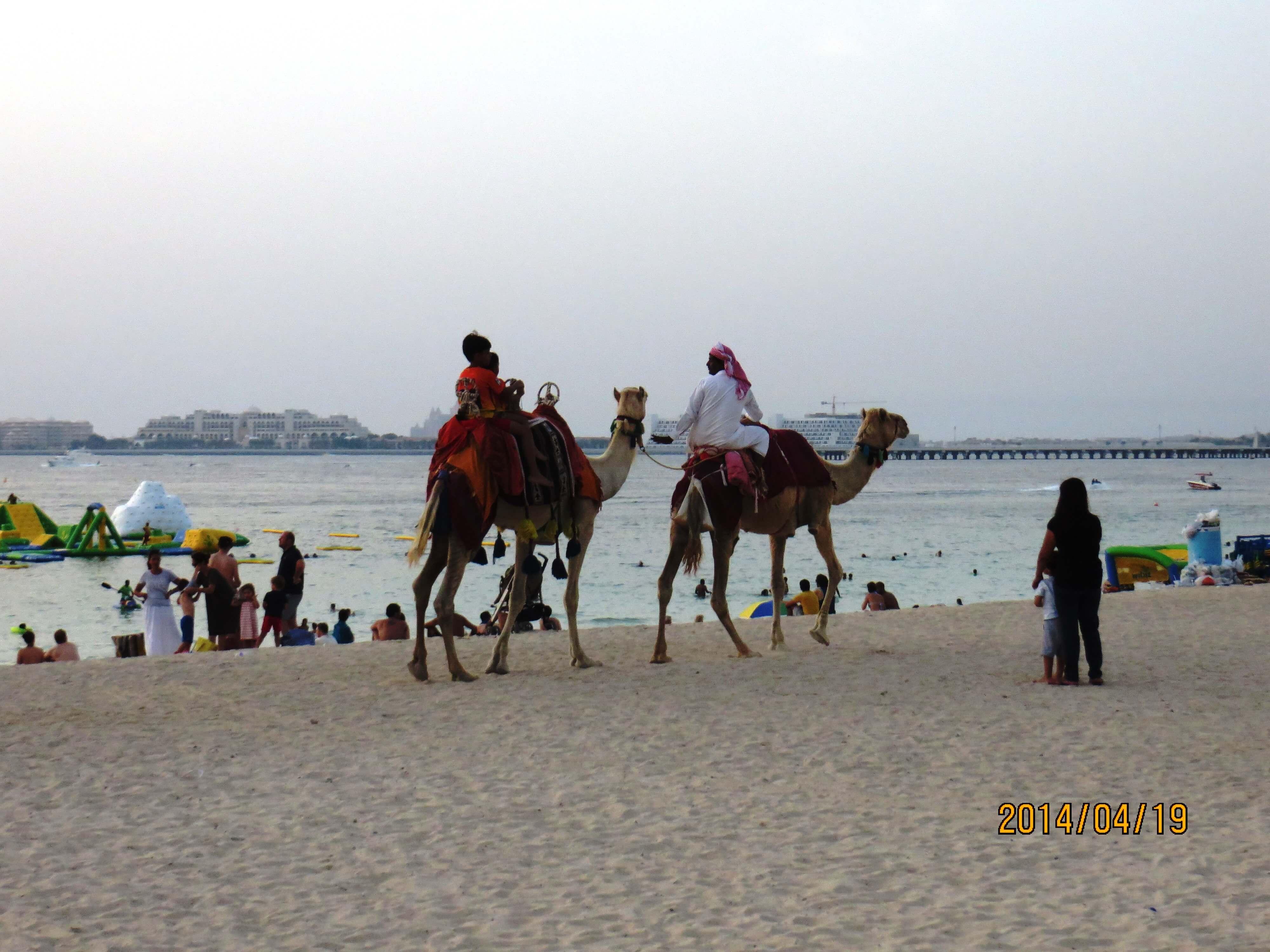 Showing Xxx Images For Arab Hotel Xxx  Wwwfuckpixclub-5683